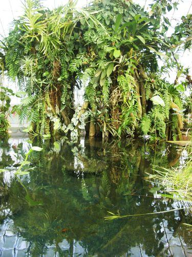 Cypress swamp?